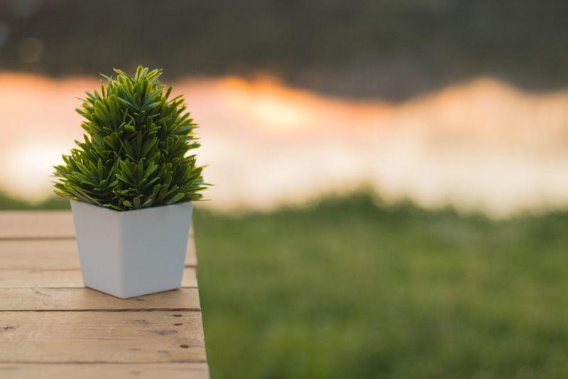 Green Plant Artificial Background Leaf Leak Nautre Reflect River Sky Sunset Wooden