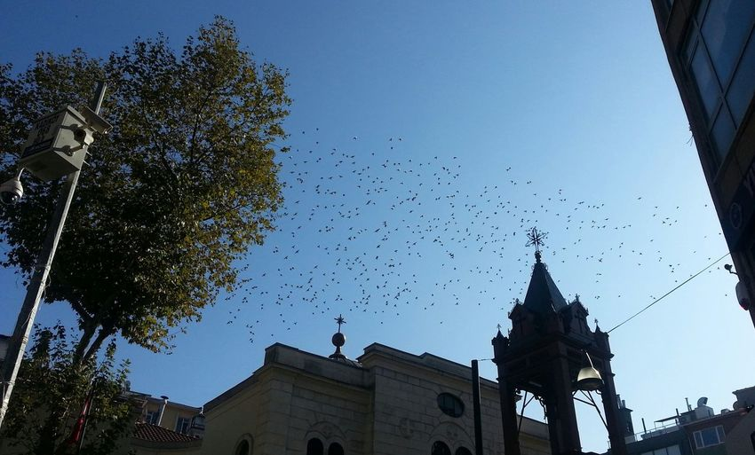 Pigeons scatter over the Aya Efimia Orthodox Church in Kadikoy Asian Side Of Istanbul Istanbul Built Structure House Of Worship Low Angle View Urbanphotography