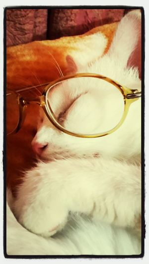 My catoo.... <3 First Eyeem Photo