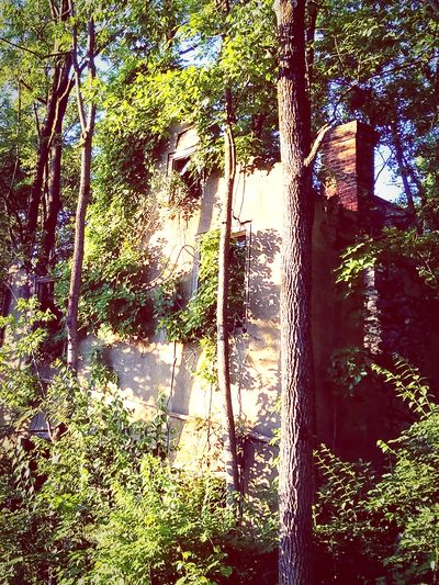 Outdoors No People Growth Nature Day Grown Together Scenics Abandoned Building Houses And Homes House Facade Faded_world Faded But Not Forgotten Crumbling Building Forest Photography