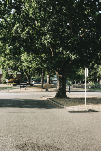 Street amidst trees in park