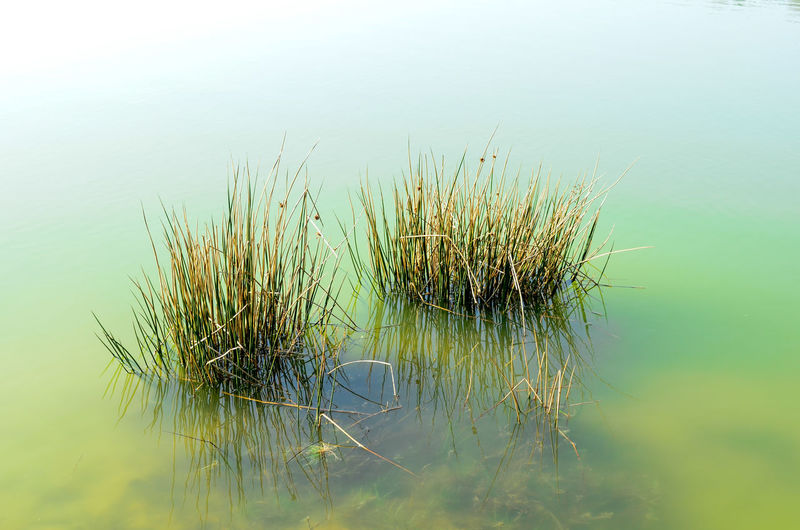 Close-up of plant in lake