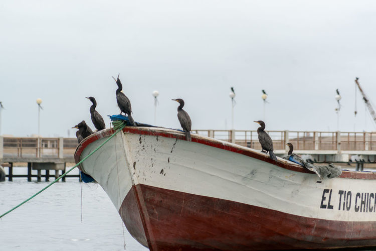 Birds perching on boat moored on sea against sky