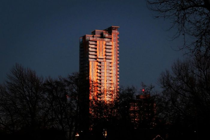 Architecture Bare Tree Branch Building Exterior City Clear Sky Documentary Nature Photography Photography Taking Photos A Golden Colours Growth Illuminated Low Angle View Nature Night No People Outdoors Photography Silhouette Sky Skyscraper Tower Block Office Block Westminster Tree