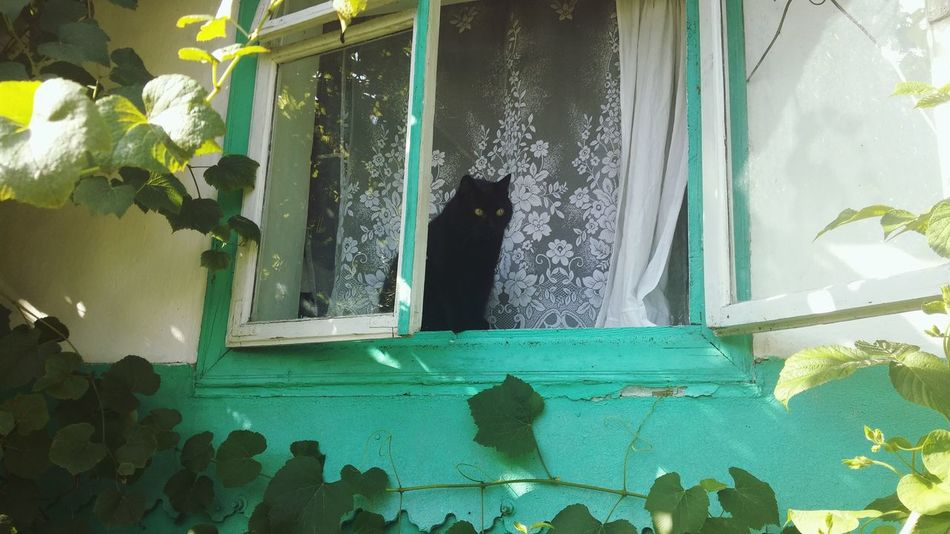 My baby Nora I Love My Cat ❤ Black Cats Lovers Black Cat Is Just So Beautiful. I Love Colors Green House