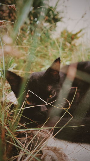 Pet Portraits One Animal Domestic Cat Animal Themes Domestic Animals Pets Feline Close-up Nature Outdoors Fine Art Photography EyeEmNewHere Full Length The Week On EyeEm Portrait Low Section Animal Wildlife Animals In The Wild Nature Animal