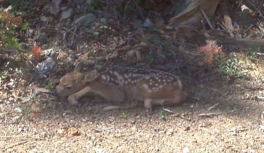 Camoflauge Natures Camouflage Nature Nature Photography Naturelovers Nature_collection Deer Deers Deer Moments Fawns Fawn Fawn😍