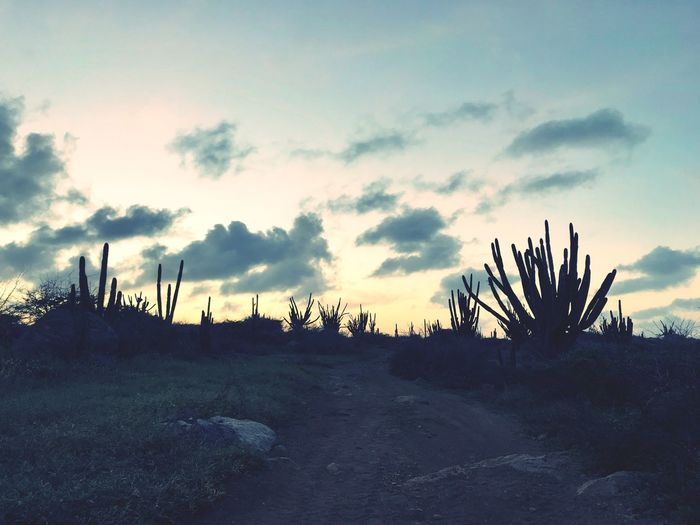 Antilles Travel Cactus Caribbean Dutch Caribbean Island Arid Climate Arid Landscape Sky Nature Tranquility Tranquil Scene Beauty In Nature Cloud - Sky Growth Outdoors No People Landscape Scenics Sunset Day