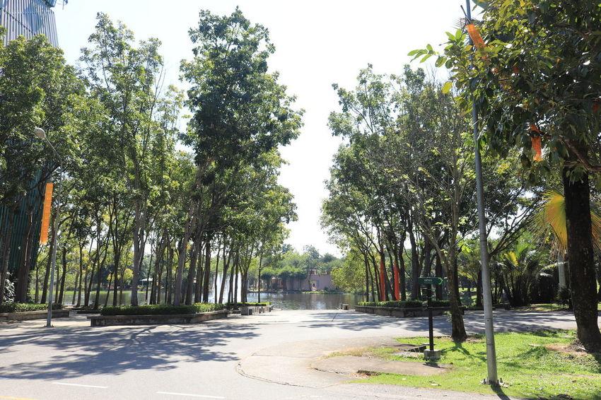 อุทยานหลวงราชพฤกษ์ Tree Plant Growth Nature Green Color No People Day Street Direction Beauty In Nature City Footpath Outdoors Road Transportation The Way Forward Sky Sunlight Tranquility Shadow Treelined อุทยานหลวงราชพฤกษ์ ราชพฤกษ์