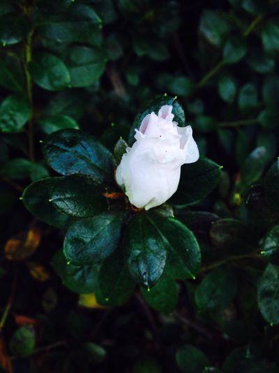 No Filter White Flower Simplicity