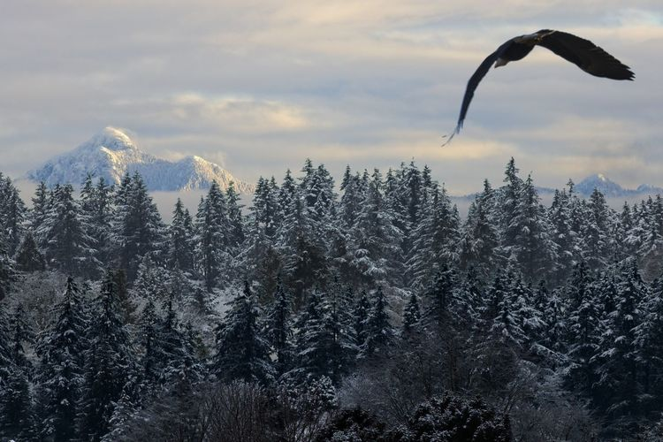 Tree Sky Beauty In Nature Mountain Nature Scenics - Nature Cloud - Sky No People Winter Tranquil Scene Tranquility Cold Temperature Growth Snow Forest Day Non-urban Scene Outdoors Coniferous Tree Bird