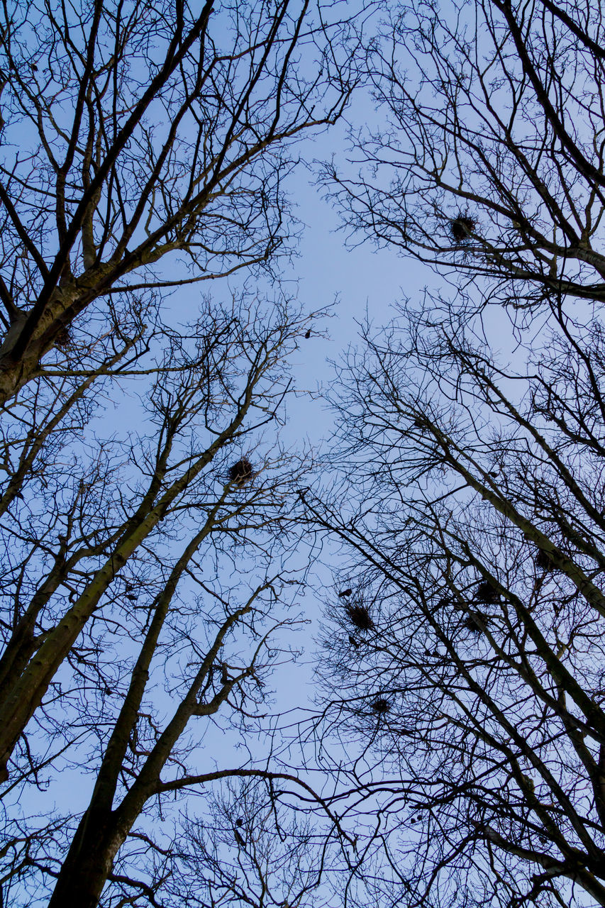 tree, low angle view, branch, nature, no people, bare tree, beauty in nature, day, outdoors, sky, tranquility, animal themes