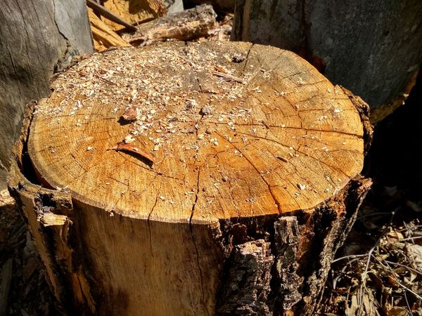 Textured  Close-up Tree Ring Tree Stump Deforestation Cracked Log Forestry Industry Lumber Industry