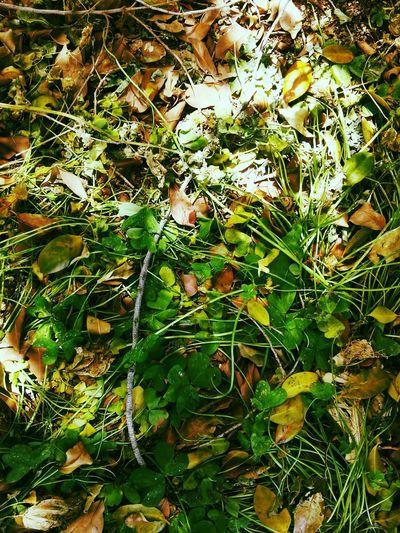 Foliage Fallen