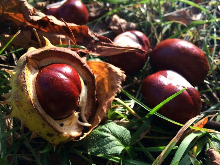 IPS2015Fall Autumn Nature