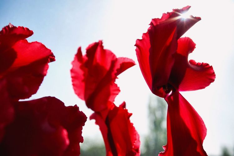 Close-up of red flowers against sky