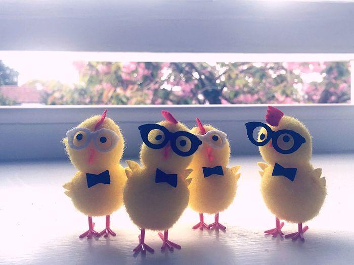 Easter Chicks Coolchicks