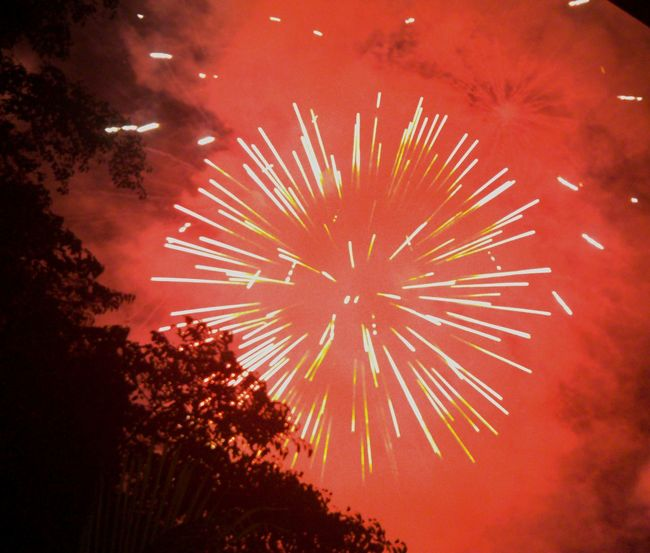 LGG4 Lgg4photography Firework Display Fireworks Philippines Events Fireworks In The Sky Show Lights EyeEm Exploding Fireworks Exploding Entertainment EyeEm Gallery Eyeemphotography EyeEm Best Shots Illuminated Nightphotography Outdoors
