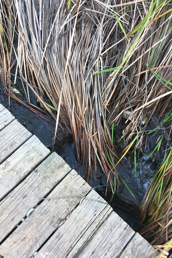 Wood - Material Outdoors No People Day Nature Close-up Water Grass Beauty In Nature Animal Themes Haystack Adapted To The City