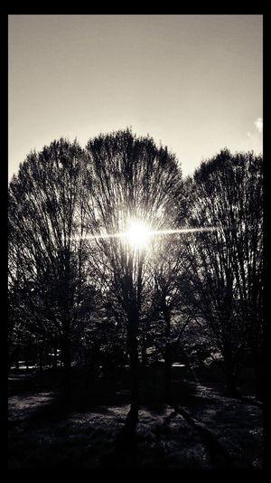 Light And Shadow Everydayisasurprise I Believe In Life Sunday Eye4enchanting Nature Photography Naturelover