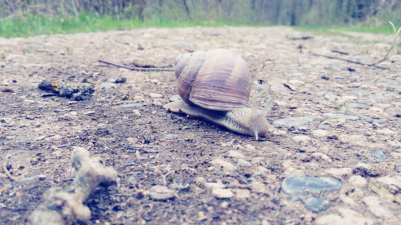 one animal, animal themes, animals in the wild, day, nature, outdoors, no people, animal wildlife, close-up