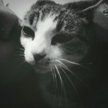 Love mi gato
