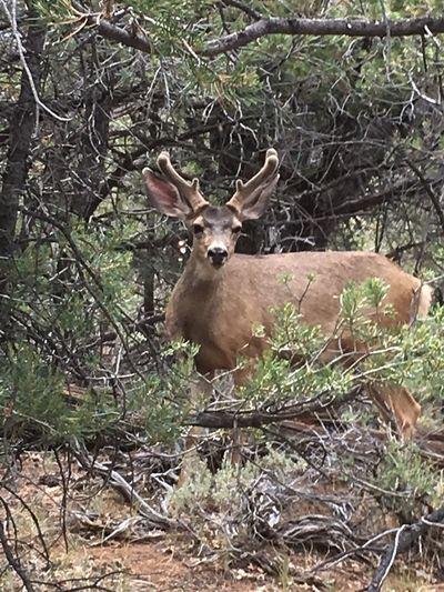 Deer First Eyeem Photo