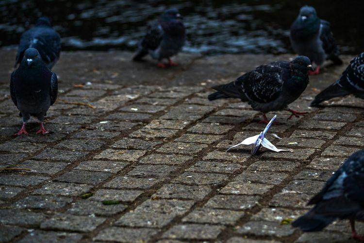 -Bird-