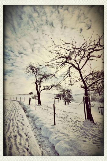 Snow Winter Wonderland