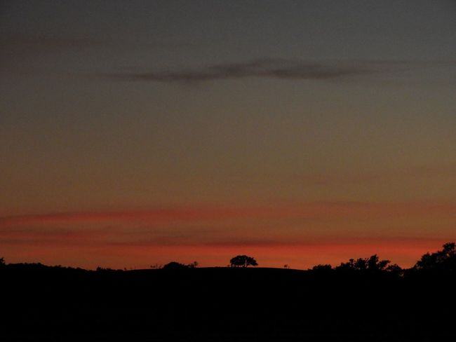 Red sunset and horizon wide angle Silhouette Sunset Beauty In Nature Nature Scenics Tranquil Scene Tranquility Orange Color Sky Landscape No People Outdoors Tree Day