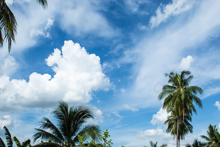 Beautiful clouds with Sun. Beauty In Nature Blue Cloud - Sky Coconut Palm Tree Day Green Color Growth Leaf Low Angle View Nature No People Outdoors Palm Leaf Palm Tree Plant Scenics - Nature Sky Tranquil Scene Tranquility Tree Tropical Climate Tropical Tree