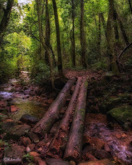 Umjasai #Nature  #forest #shillong #trekking #river Travel