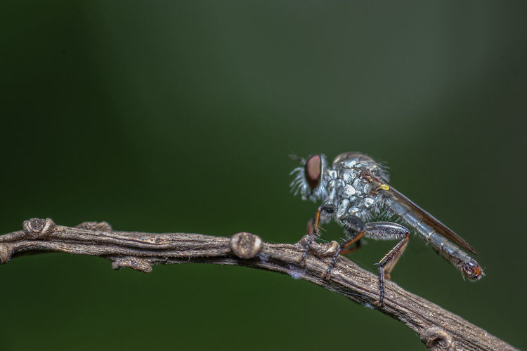 Close-up of insect on branch