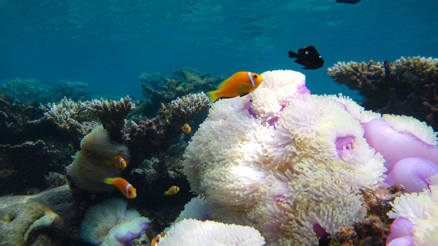 Close-up of fish in sea