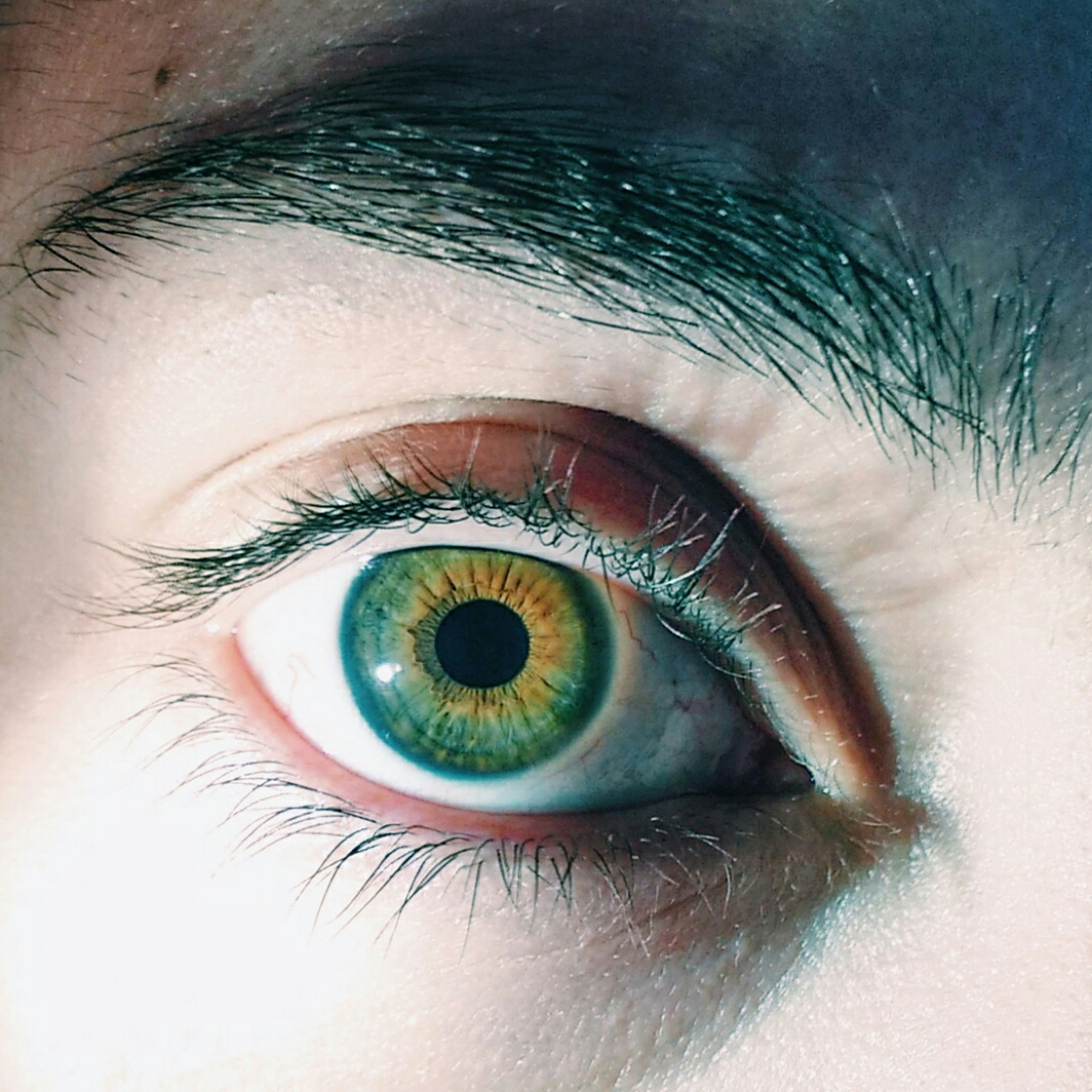 human eye, eyelash, eyesight, close-up, sensory perception, part of, looking at camera, iris - eye, portrait, eyeball, unrecognizable person, reflection, lifestyles, extreme close-up, indoors, human skin, full frame