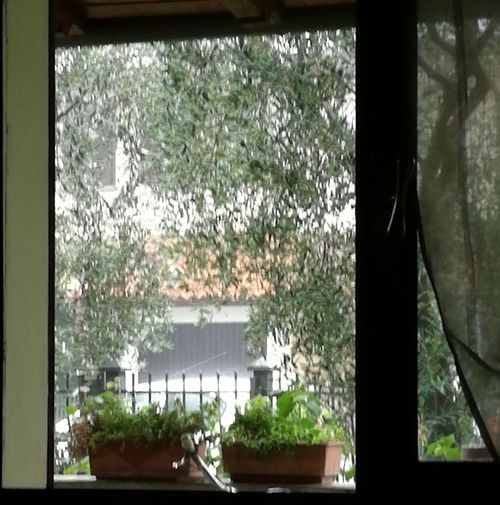 Window Indoors  Day No People Plant Tree Water Architecture Nature Close-up