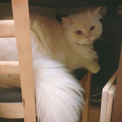 Always Be Cozy Heema Cat