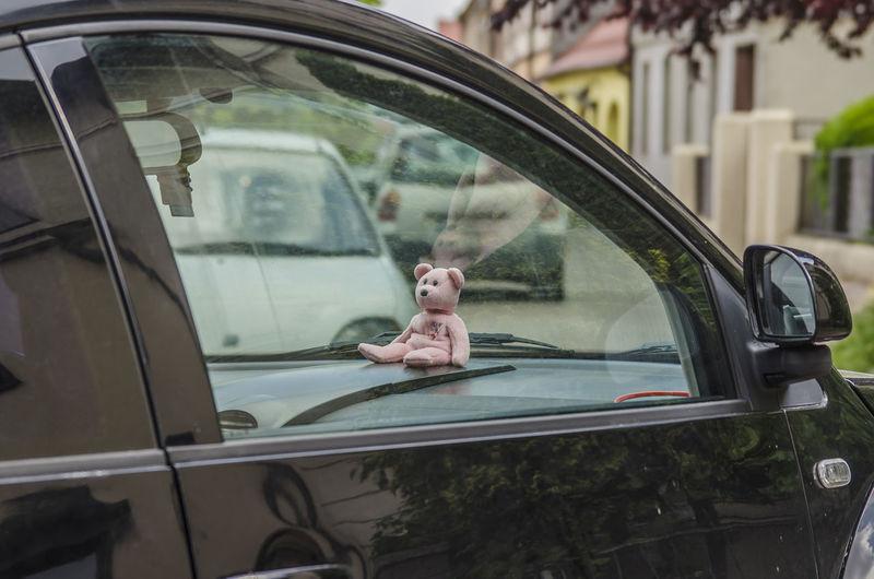 Teddy bear in a car