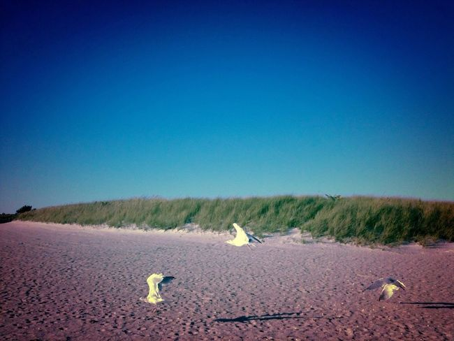 Seagulls on Cape Cod