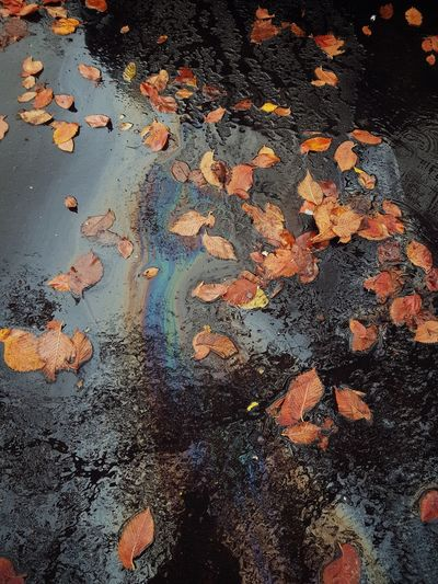 High angle view of wet autumn leaves on road