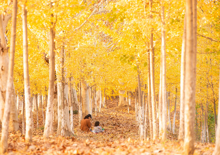 Soft Time Autumn Tree Leaf Plant Part Change Forest Nature Yellow Land Plant Day WoodLand Ginko Mother & Daughter
