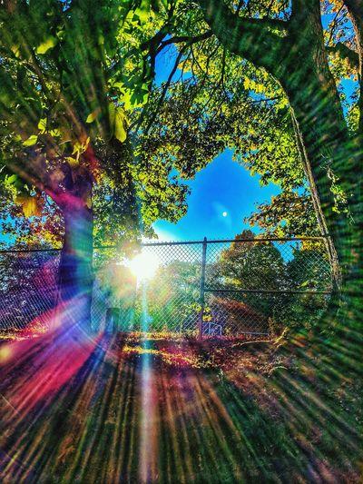 Illuminated tree against sky