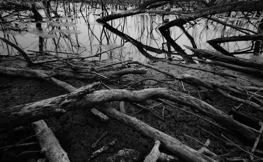 Fallen tree over lake in forest