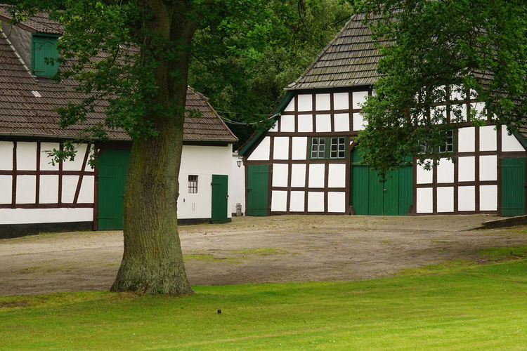 House against trees