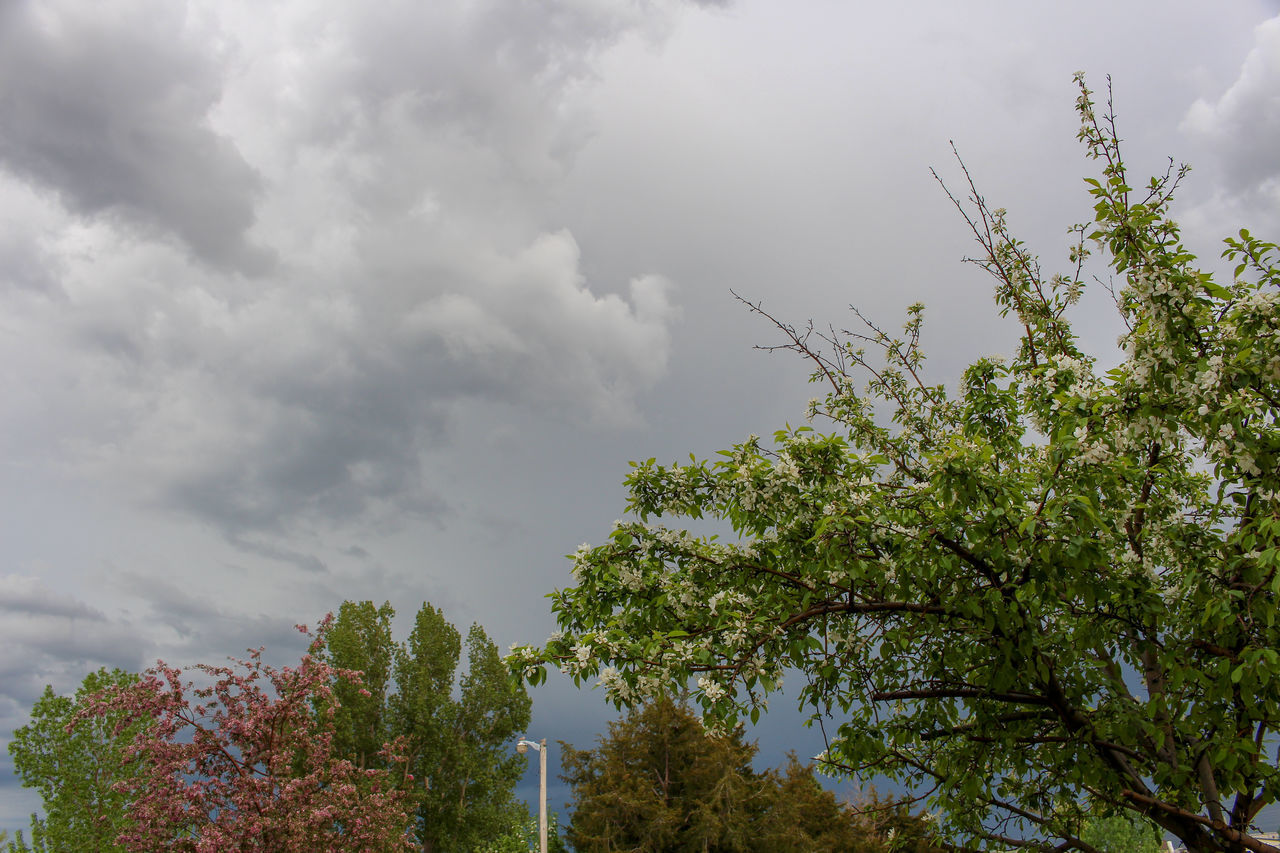 sky, plant, cloud - sky, tree, growth, beauty in nature, nature, low angle view, day, no people, tranquility, outdoors, green color, tranquil scene, overcast, scenics - nature, branch, leaf, plant part
