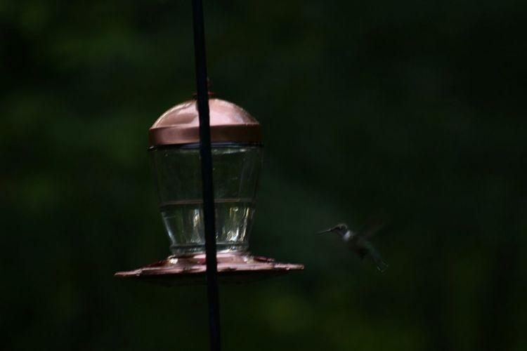 Hummingbird Hummingbird Feeder Watching Humming Birds Nature Nature Photography EyeEm Best Shots EyeEm Nature Lover EyeEm Best Shots - Nature