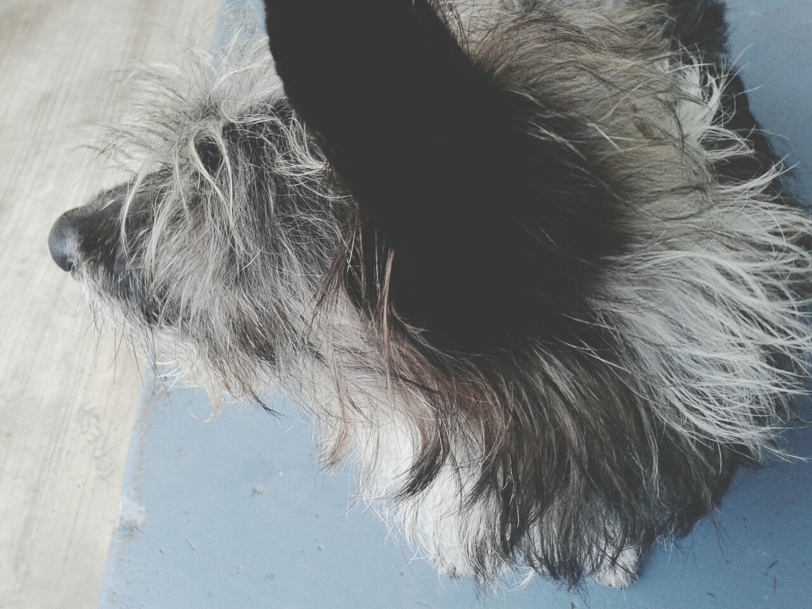one animal, animal themes, domestic animals, mammal, pets, dog, animal head, close-up, animal body part, animal hair, part of, high angle view, domestic cat, day, relaxation, feline, whisker, no people, outdoors, cat