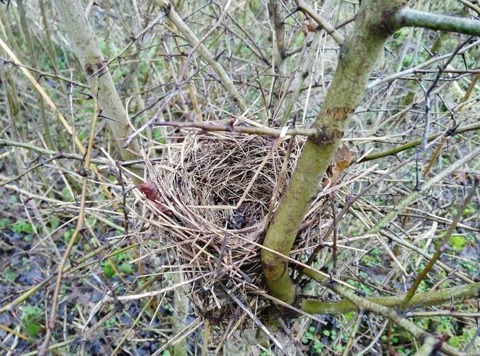 Birdnest Nature Tree No People Outdoors Beauty In Nature Forest