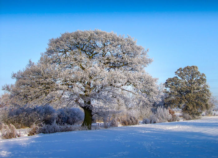 Beauty In Nature Clear Sky Cold Temperature Day Nature No People Snow Tree