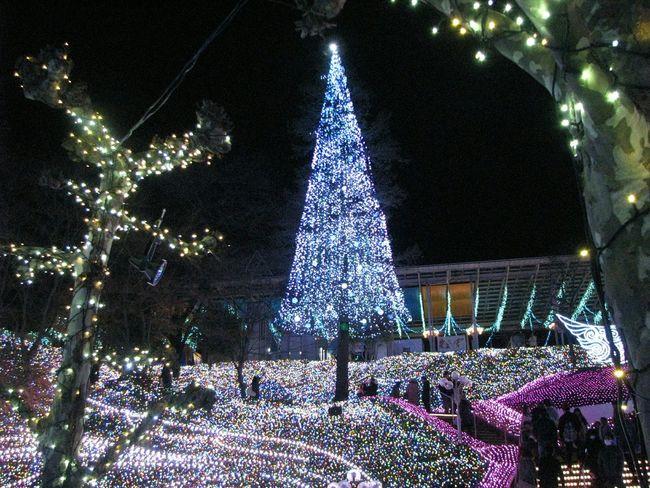 イルミネーション Japan Xmas Lights  Xmas Tree